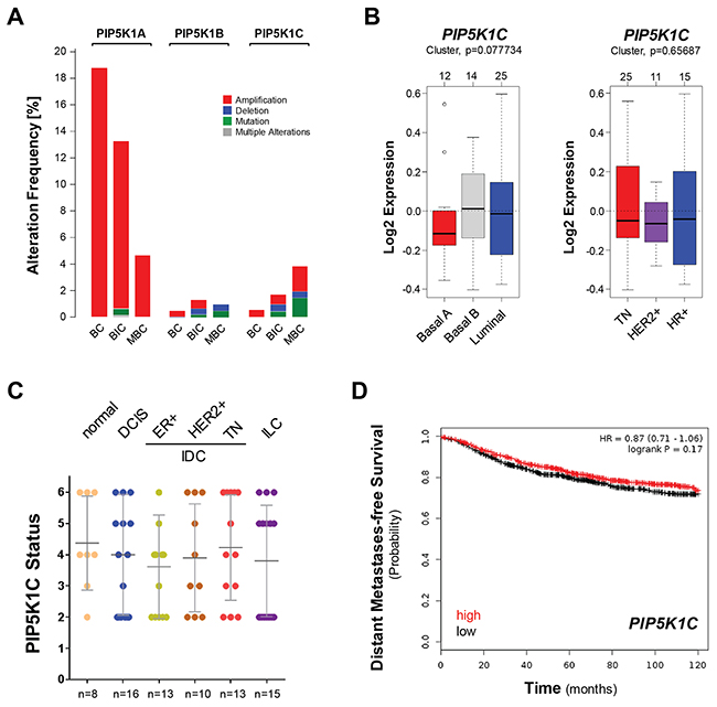 The expression of PIP5K1C is not predictive for breast cancer survival or subtype.