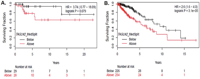 TAGLN2 mRNA levels are associated with poor survival among gliomas.