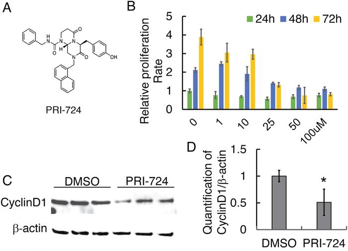 Effect of PRI-724 on 143B cell proliferation.