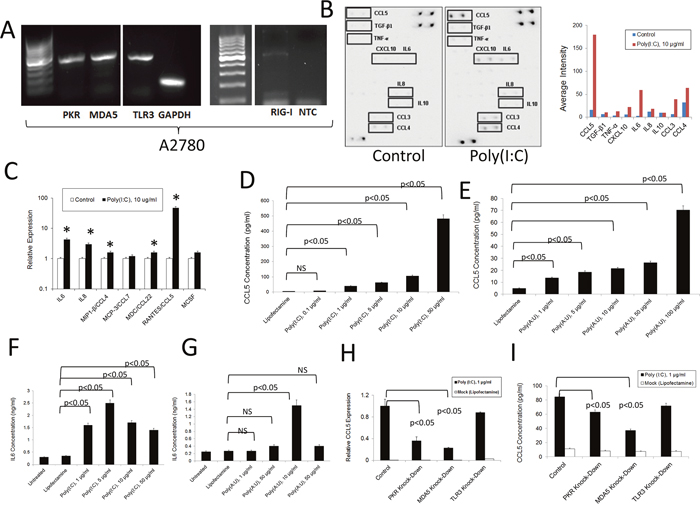 Inflammatory response of human A2780 ovarian cancer cells to dsRNA stimulation.