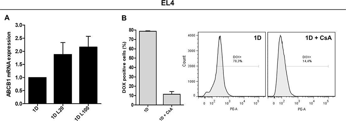 Expression and function of drug efflux pumps in response to LMW HA and DOX co-treatment.