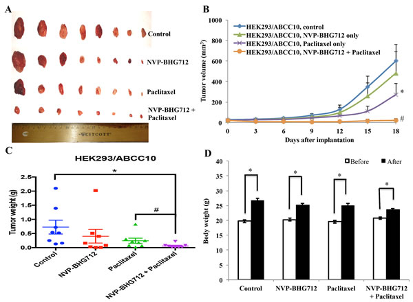 The effect of NVP-BHG712 on the growth of ABCC10-expressing tumors in athymic nude mice.