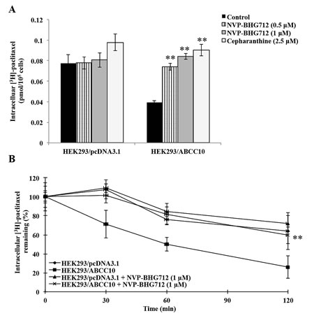 NVP-BHG712 increases the cellular accumulation of [