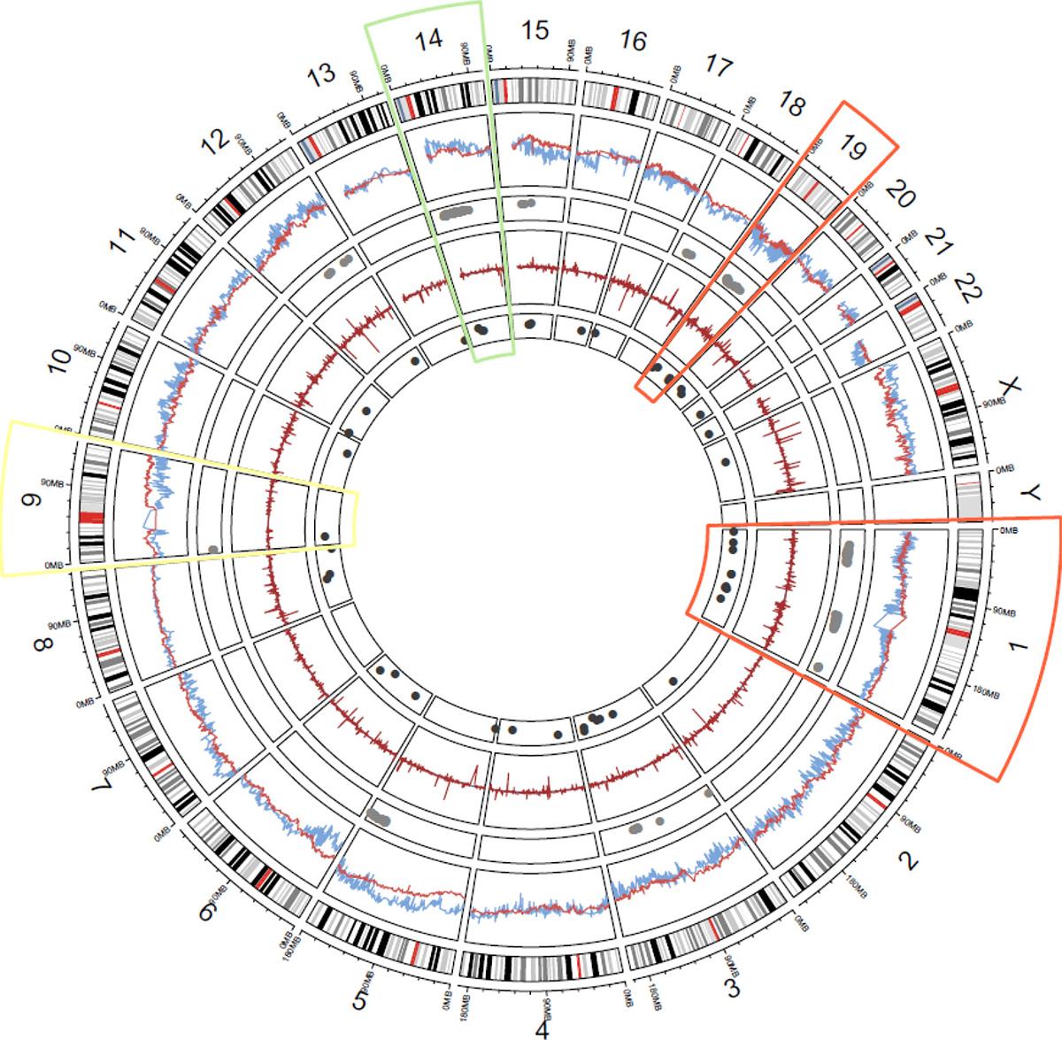 Genome-wide