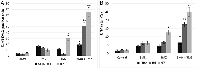 Accumulation of DSB in BMN673+TMZ-treated H6 and H7 glioblastoma cells and in NHA cells.