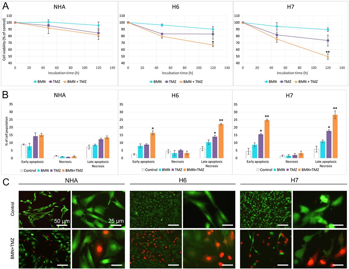 BMN673+TMZ anti-glioblastoma effect.