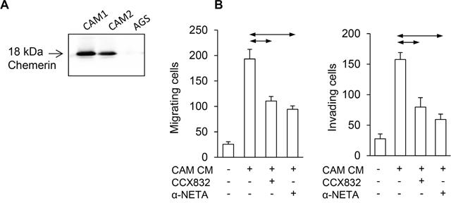 Chemerin mediates myofibroblast effects on AGS cancer cells.