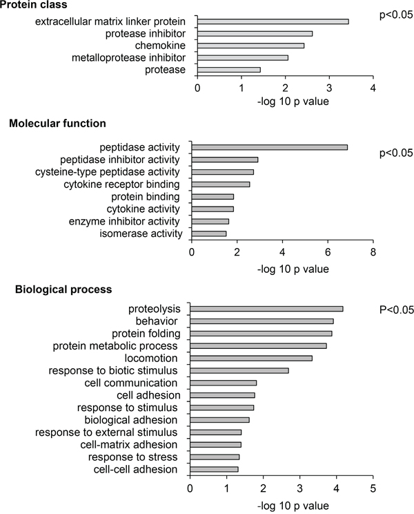 Meta-analysis of SIDLS labeling of the AGS cell secretome identifies proteins involved in inhibition of proteolysis as targets of chemerin.