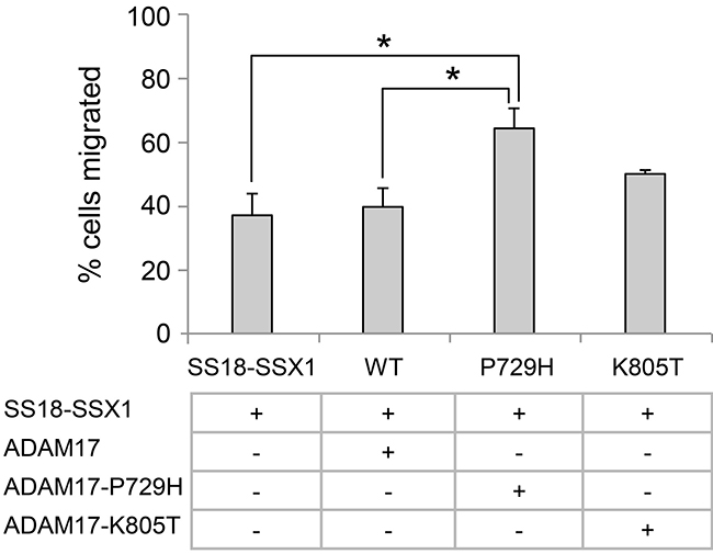 Analysis of the effects of metastatic synovial sarcoma-associated ADAM17 mutations using cell migration assay.