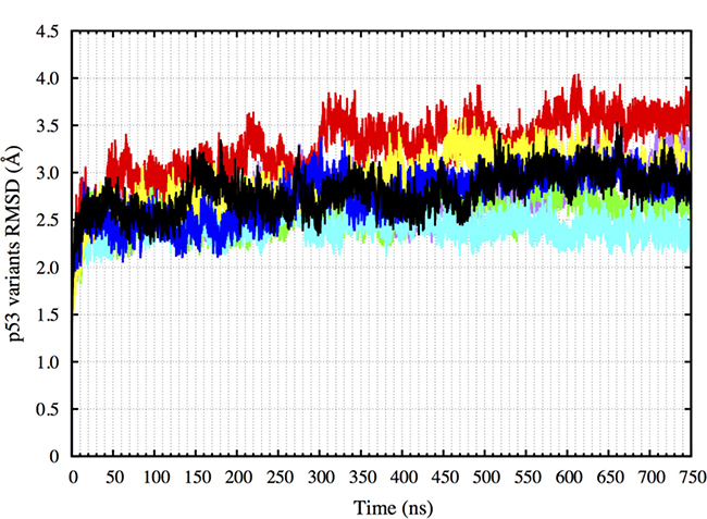 RMSD of the p53 variants non-hydrogen atoms over 750 ns.