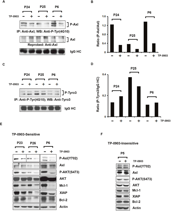 TP-0903 (tartrate salt) modulates CLL B-cell signaling proteins.