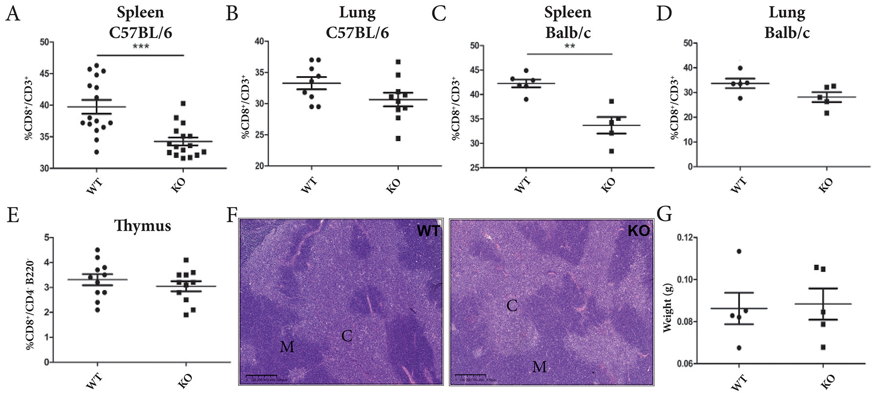 ADAM28 deficiency reduces CD8+ T cell mobilization to splenic and pulmonary tissues in tumor-free mice.