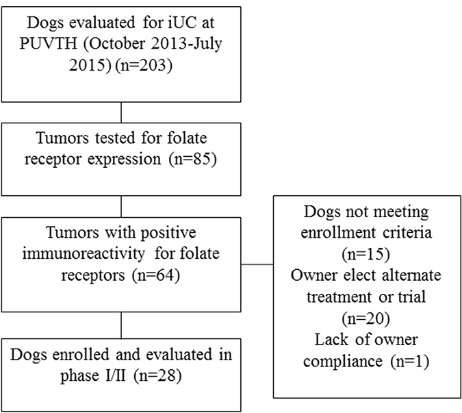 Summary of screening and enrollment of dogs in the EC0531 trial.