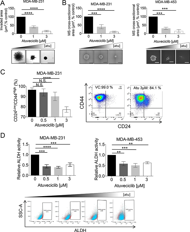 Effect of atuveciclib on mammospheres and stem-like cancer cells from TNBC cell lines.
