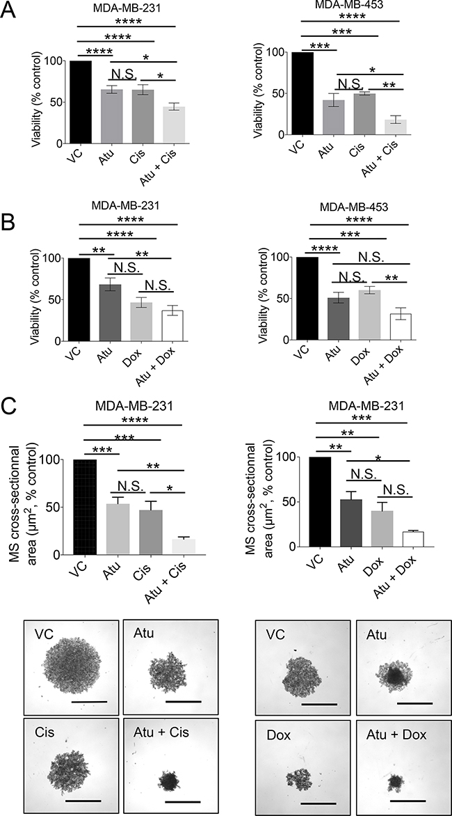 Assessment of cell viability upon atuveciclib treatment in combination with chemotherapy in MDA-MB-231 or MDA-MB453.