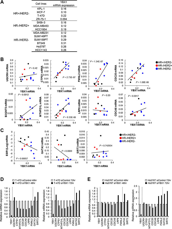 The close association of YBX1 and genes correlated with YBX1 in breast cancer cell lines.