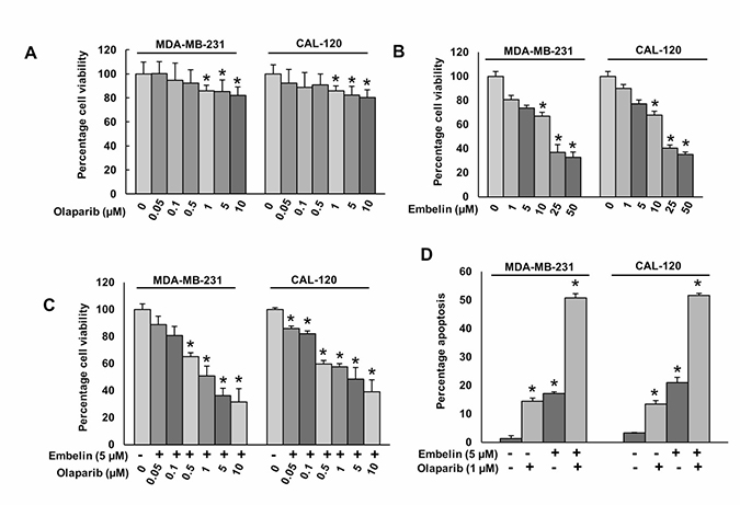Olaparib and embelin induces synergistic apoptotic response in BC cells.