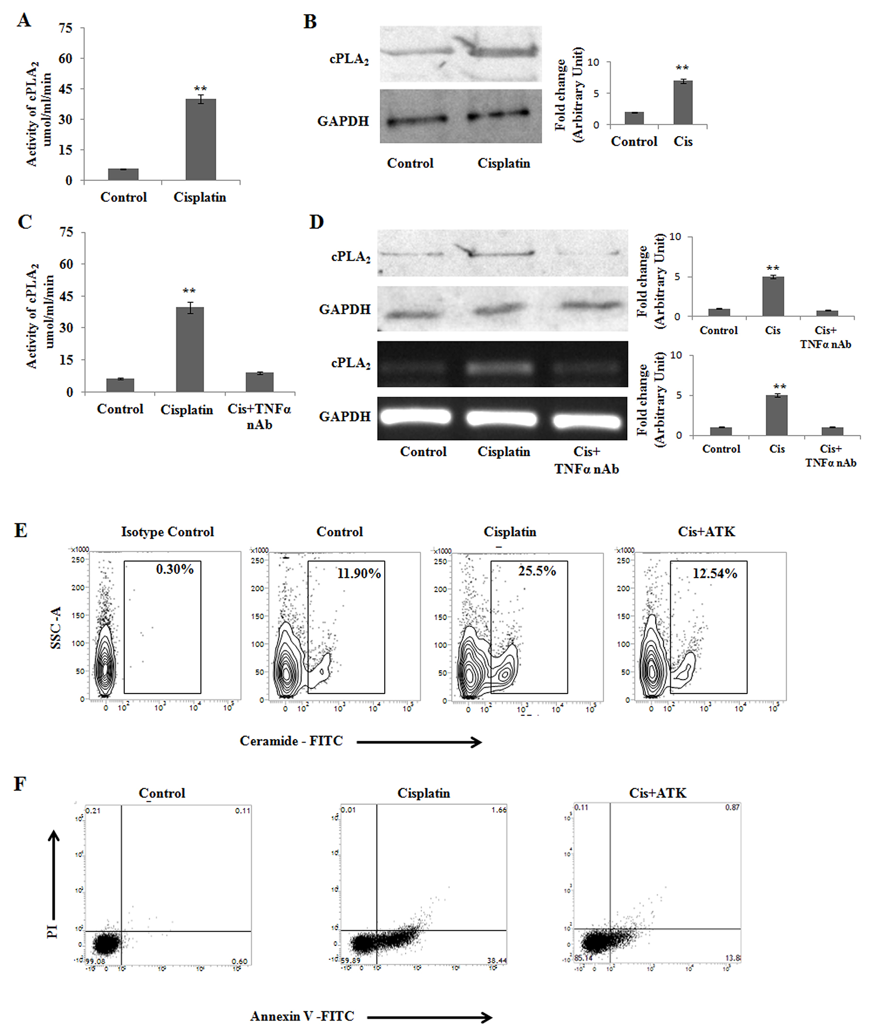 cPLA2 modulates cisplatin mediated apoptosis in PKCδ silenced B16F10 melanoma cells.