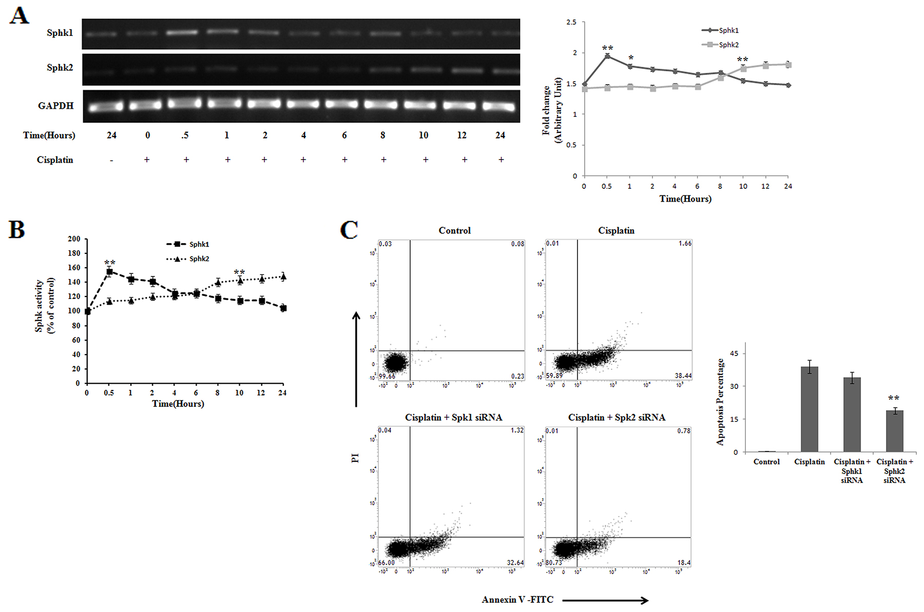 Reciprocal regulation of Sphingosine kinase 1 and Sphingosine kinase 2 on cisplatin treated PKCδ silenced B16F10 melanoma cells.