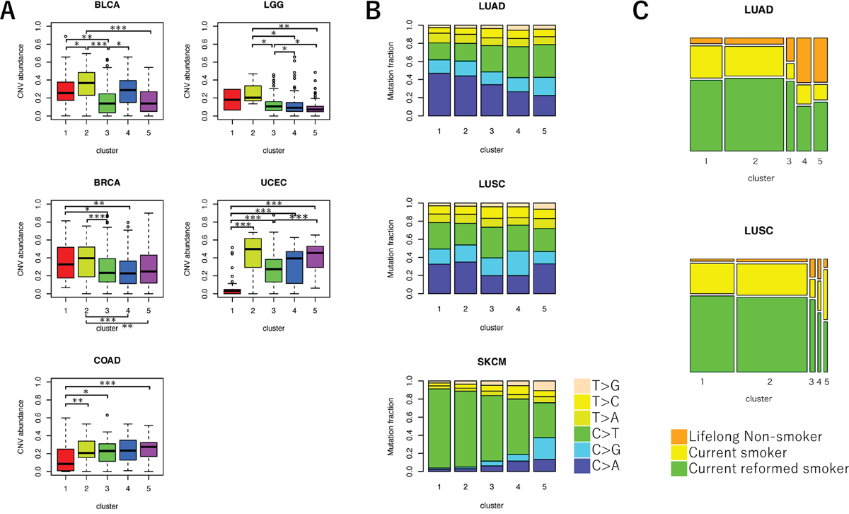 Comparison of genetic characteristics among the five clusters of VAF distributions.