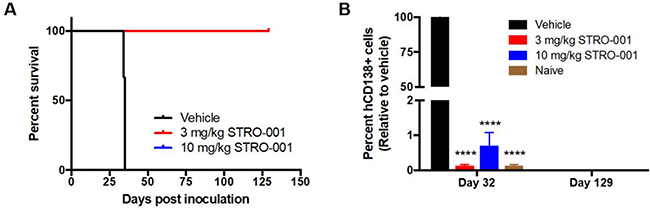 STRO-001 eradicates malignant bone marrow plasma cells and prolongs survival in MM.1S myeloma model.
