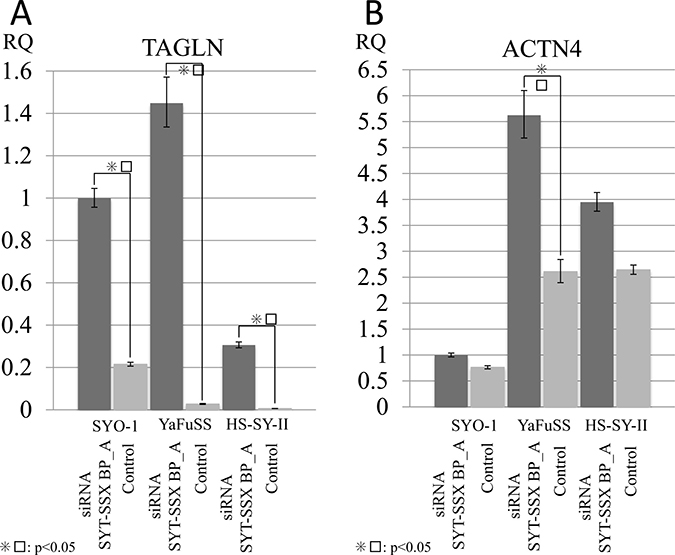 Silencing SS18/SSX activated the expression of TAGLN and ACTN4.