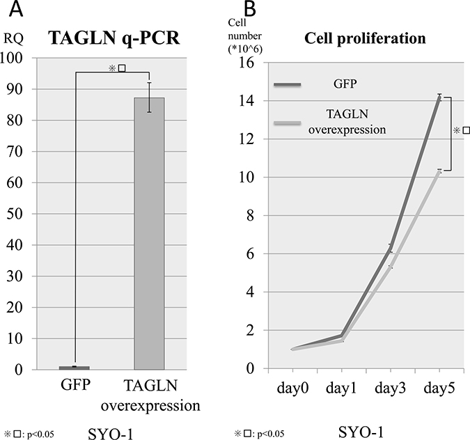 Cell viability with TAGLN overexpression.