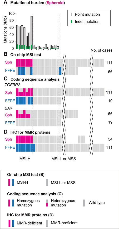 Schematic summary of the analysis results using colorectal cancer spheroids compared with those using FFPE tumors.