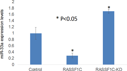 RT-PCR validation of miR-33a-5p expression in the lung cancer cell line H1299 treated with scrambled miRNA (Control), H1299 cells over-expressing RASSF1C (RASSF1), and H1299 cells with RASSF1C-knockdown (RASSF1C-KD).