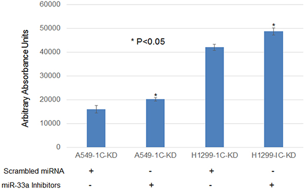 MiR-33a-5p down-regulation resulted in a statistically significant increase (15–20%) in cell proliferation of lung cancer cells A549 and H1299 with RASSF1C knocked down.