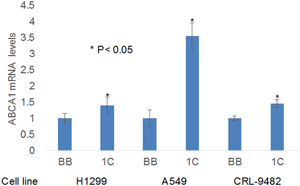 RT-PCR validation of ABCA1 expression.