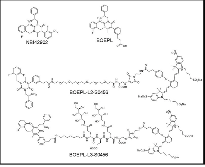 Chemical structure of LHRH-R targeting ligands and NIR conjugates: Structure of LHRH-R targeting ligands NBI42902 (ligand reported in the literature), BOEPL (modified ligand).