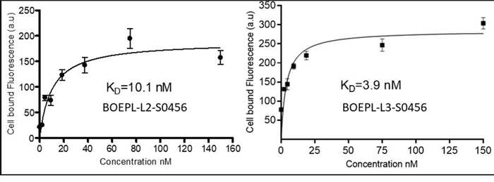 In vitro binding of BOEPL-L2-S0456 and BOEPL-L3-S0456 for MDA-MB-231 breast cancer cells expressing LHRH-R.
