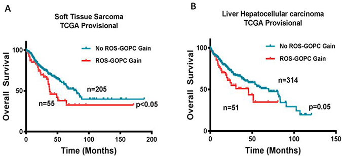 Gain in ROS1 and GOPC copy number is associated with poor overall survival.