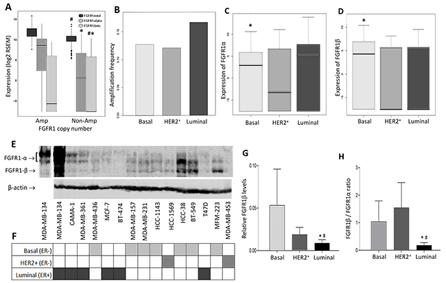 Differential expression of FGFR1α and FGFR1β splicing variants in breast cancer patients and cell lines.