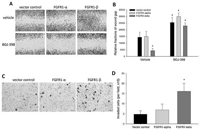 Effects of overexpression of FGFR1α and FGFR1β on cell migration and invasion capability.