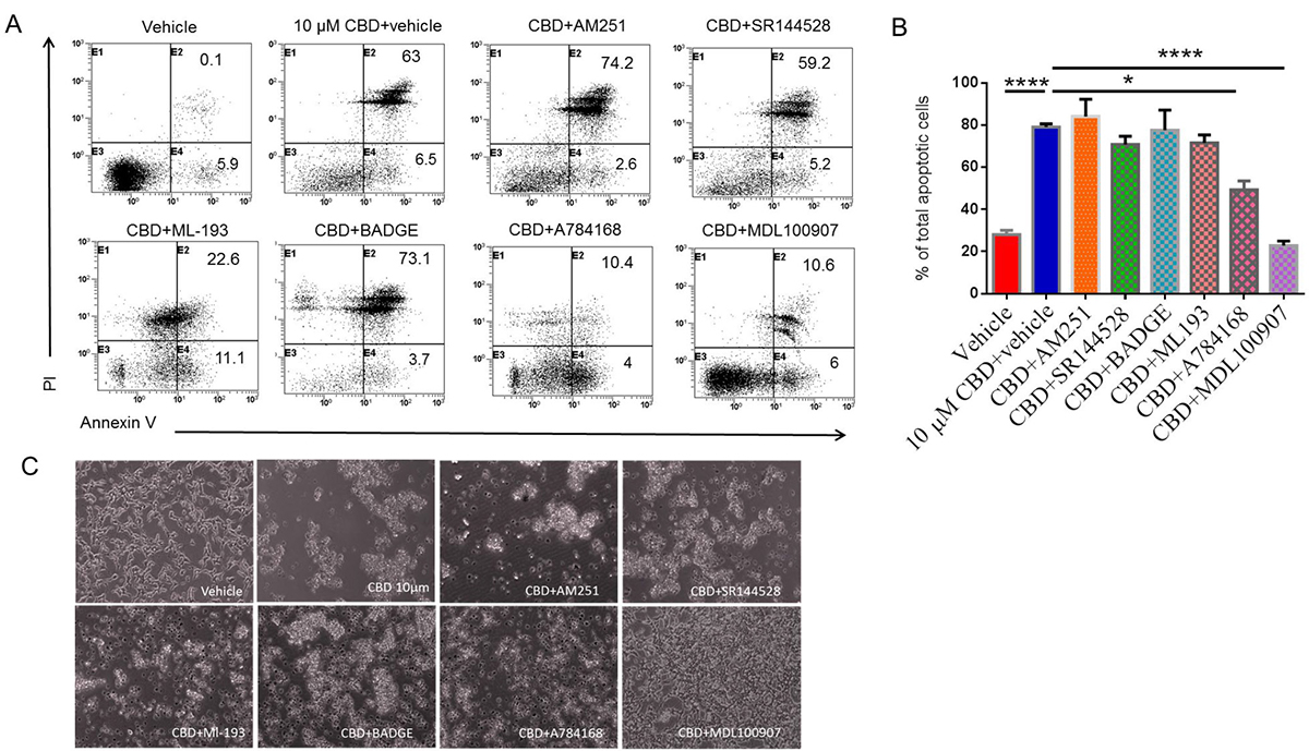 Identifying the receptors through which CBD induces apoptosis in SH SY5Y neuroblastoma cells.