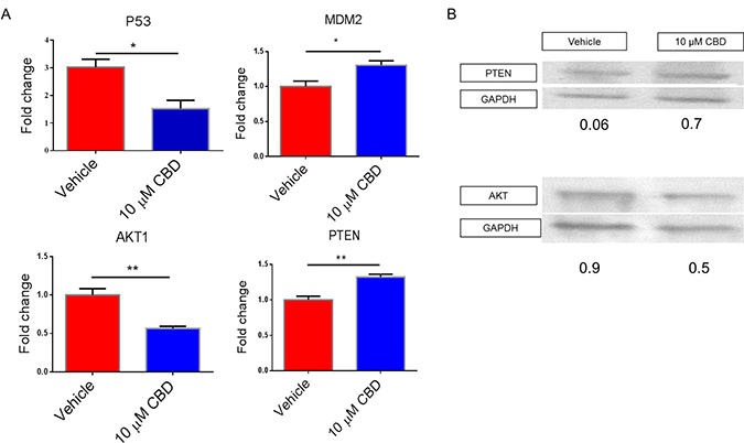 Effect of CBD on target genes involved in cell migration, invasion, metabolism and apoptosis.