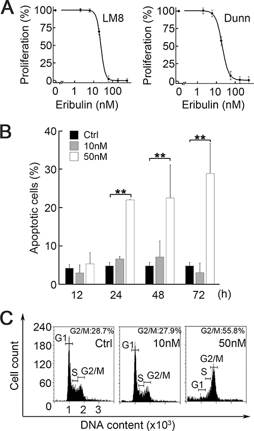 Effect of eribulin on cell proliferation, cell cycle, and apoptosis.