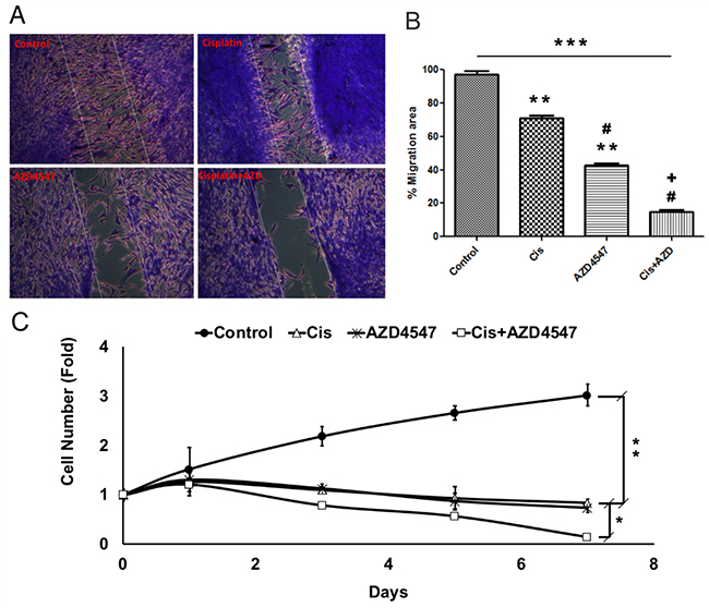 Synergistic effect of AZD4547 and cisplatin on LGACC cell migration and proliferation.