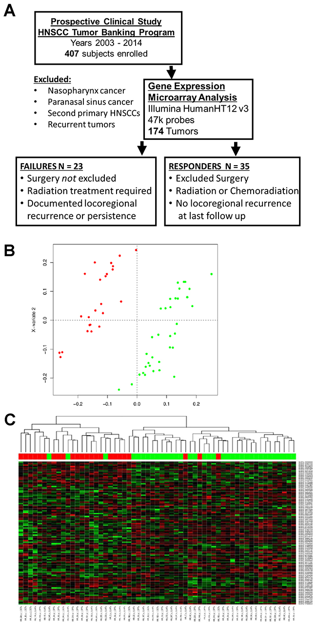 Patient cohort and gene expression data.