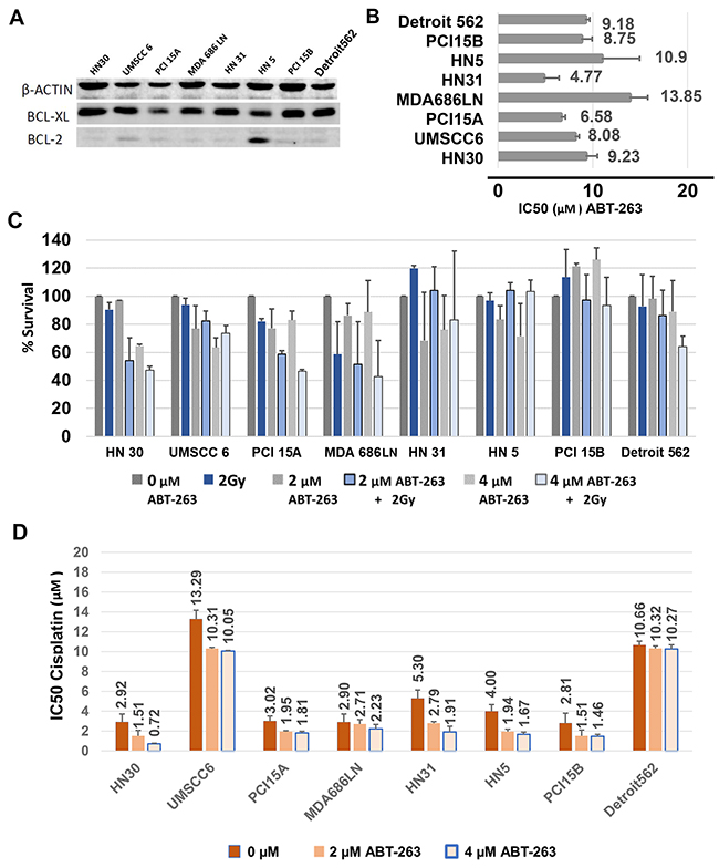 Baseline BCL-xL expression and inhibition of BCL-xL with ABT-263 (navitoclax) treatment of HNSCC cells, alone and in combination with radiation or cisplatin.