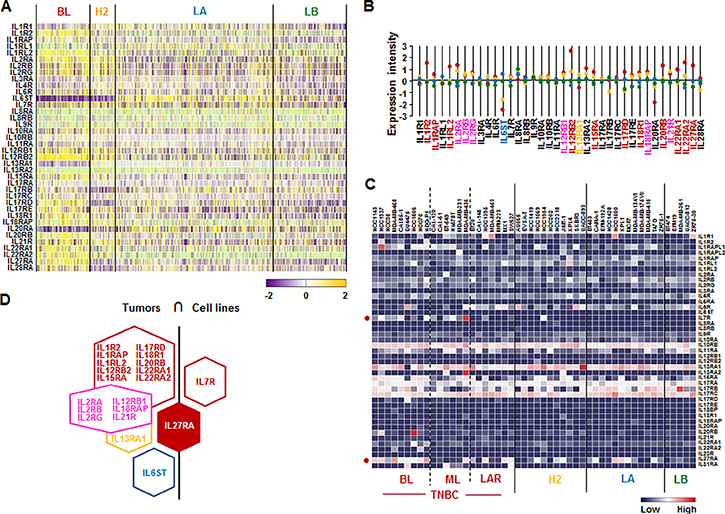 Interleukin receptor superfamily signatures in BC tissues and cell lines.
