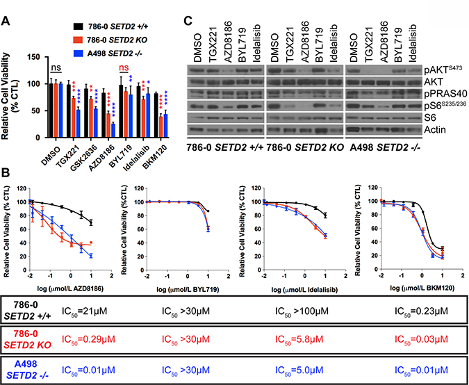 Increased sensitivity of SETD2 deficient ccRCC-derived cells to PI3Kβ-specific inhibitors.