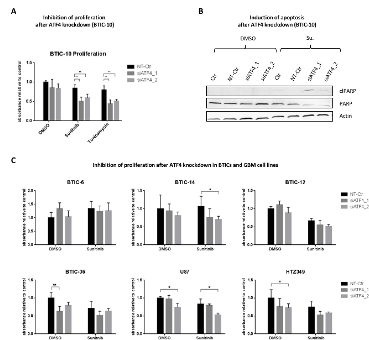 Influence of ATF4 knockdown on proliferation and apoptosis.