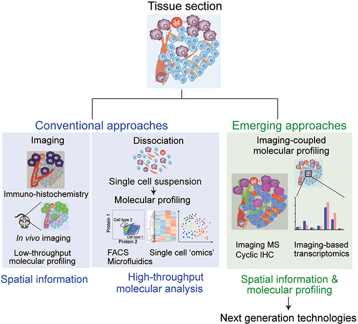 Analytical approaches to study cell–cell interaction.