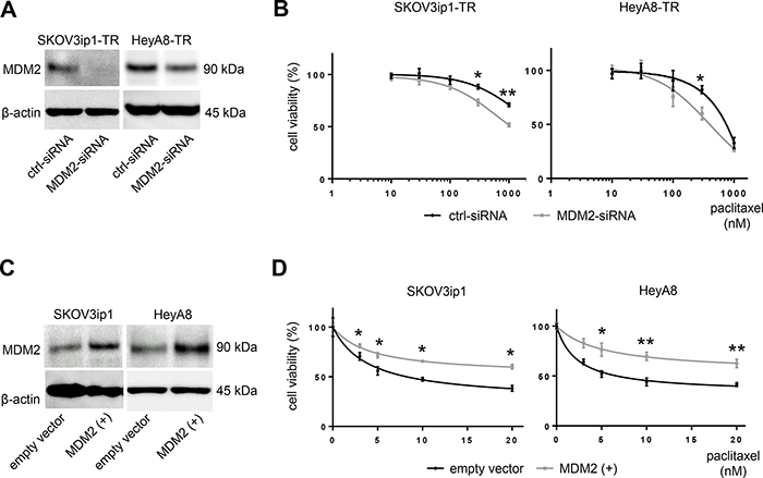 MDM2 modulates sensitivity to paclitaxel in ovarian cancer cell lines.