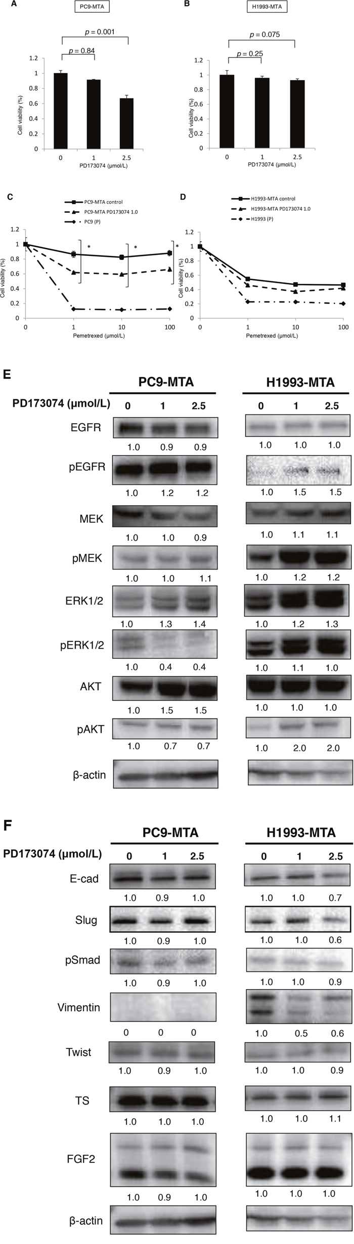 Effect of an FGFR1 inhibitor (PD173074) on the sensitivity to pemetrexed in pemetrexed-resistant lung cancer cells.