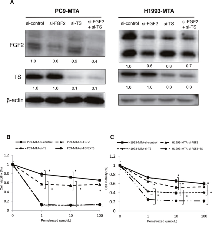 Effects of individual or dual knockdown of FGF2 and TS on sensitivity to pemetrexed in the pemetrexed-resistant lung cancer cells.
