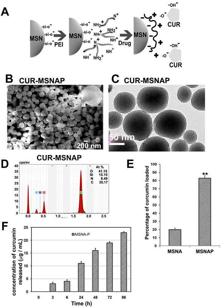 Characterization of CUR-MSNAP.